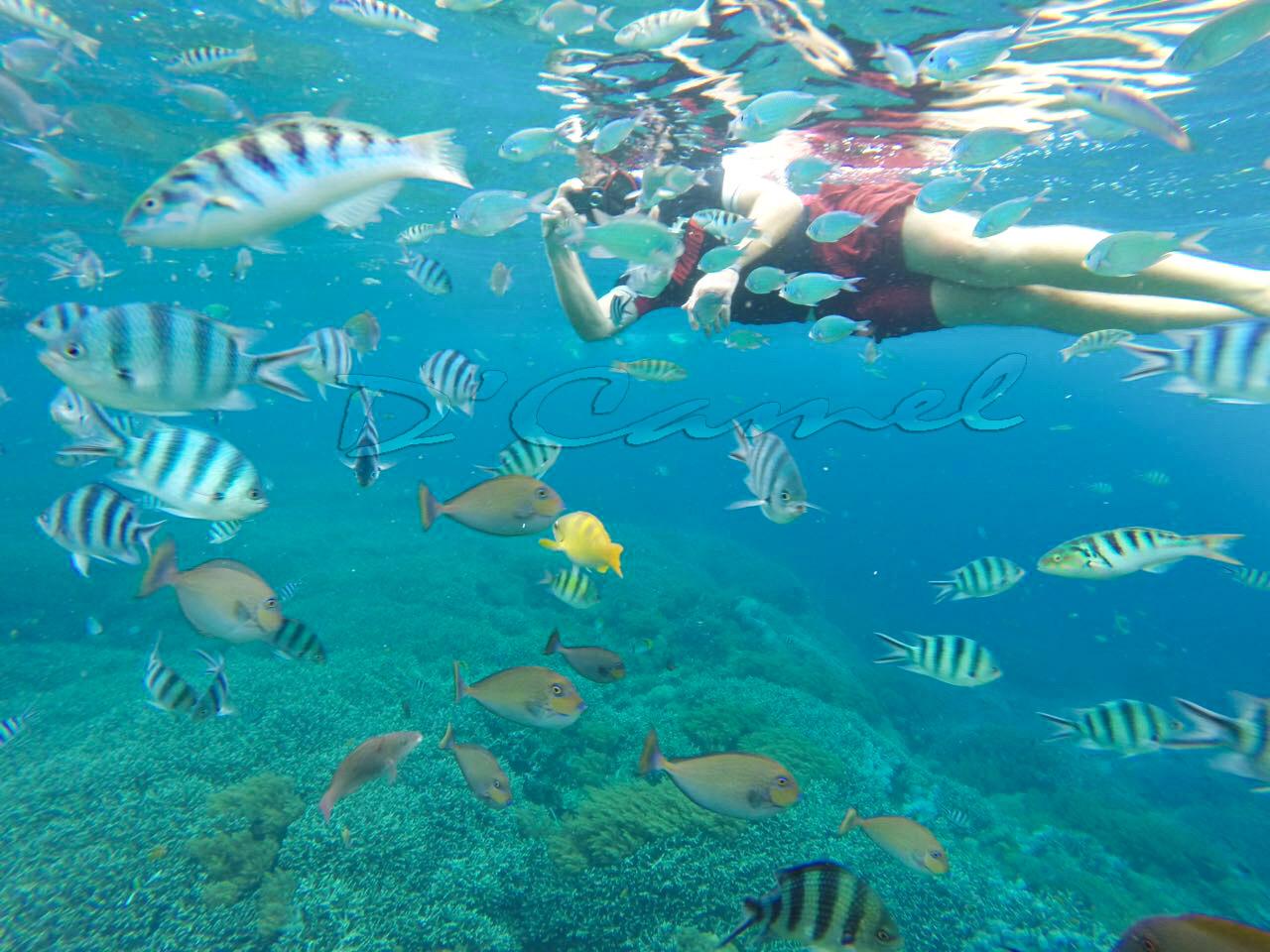 Fast Boat Lembongan, Hotel Lembongan, Boat Lembongan, Best Hotel Lembongan, Cheap Lembongan Hotel
